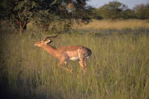 diamant éthique protection de la nature et de la faune sauvage